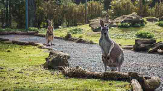 reise nach australien visum