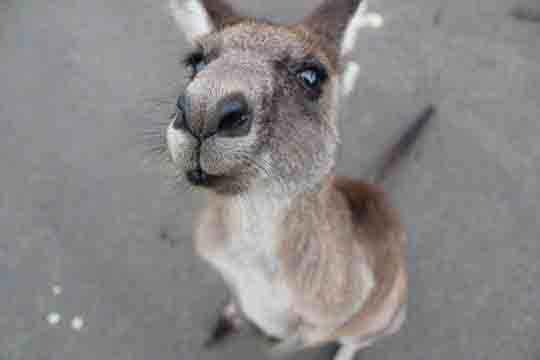 braucht man ein visum für australien