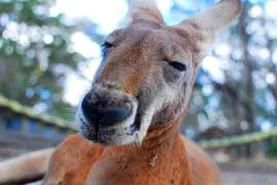 australien visum tourist