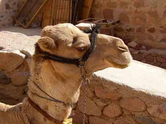 visum für Ägypten bei pauschalreisen
