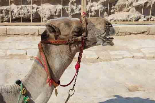 Ägypten online visum