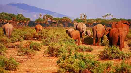 visum Kenia tansania