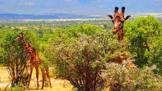 Kenia visum antrag