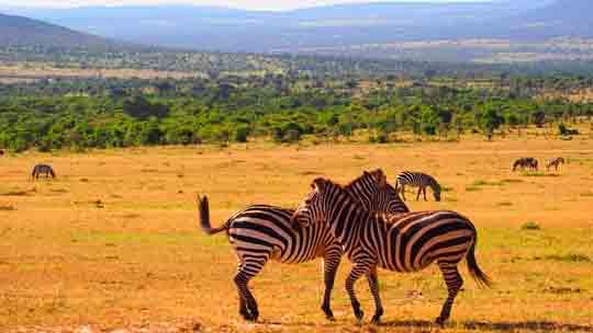 visum Kenia passbild