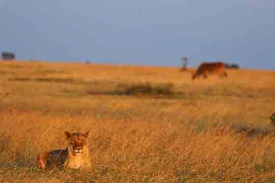 Kenia visum vordruck
