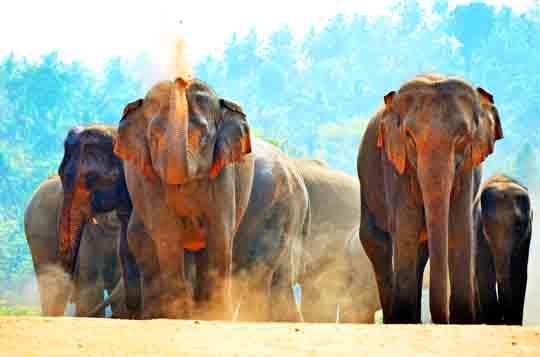 visum für Sri lanka bei einreise