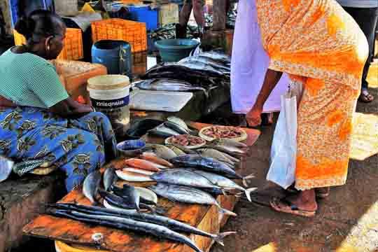 Sri lanka touristenvisum