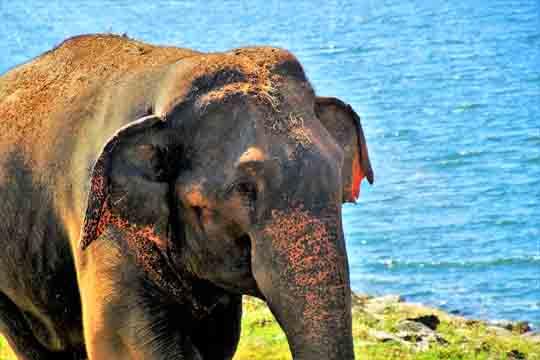 visum für Sri lanka nötig
